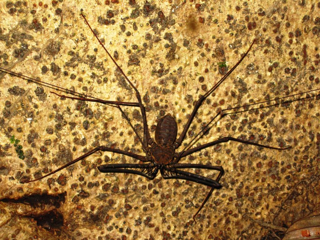L'araignée-scorpion
