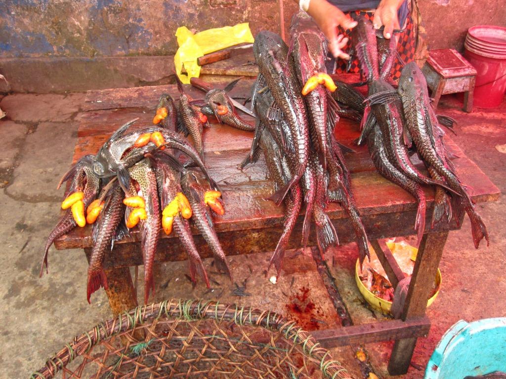 Carachamas au marché de Belén