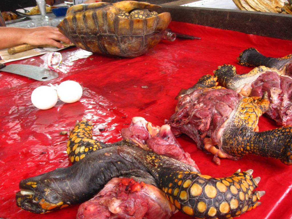Une tortue sacrifiée