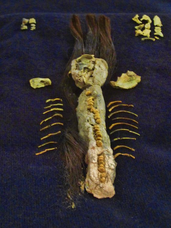 momie-foetus2