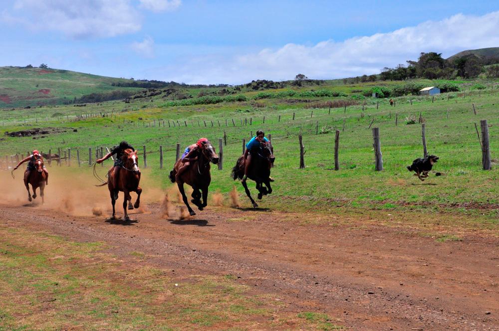 Tapati, entrainement pour l'épreuve de course de chevaux à cru
