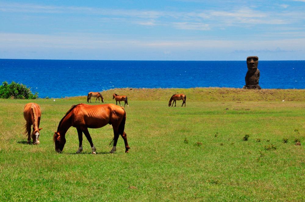 Ahu Hanga Kio'e et chevaux sauvages