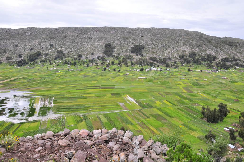 Péninsule de Capachica, les cultures