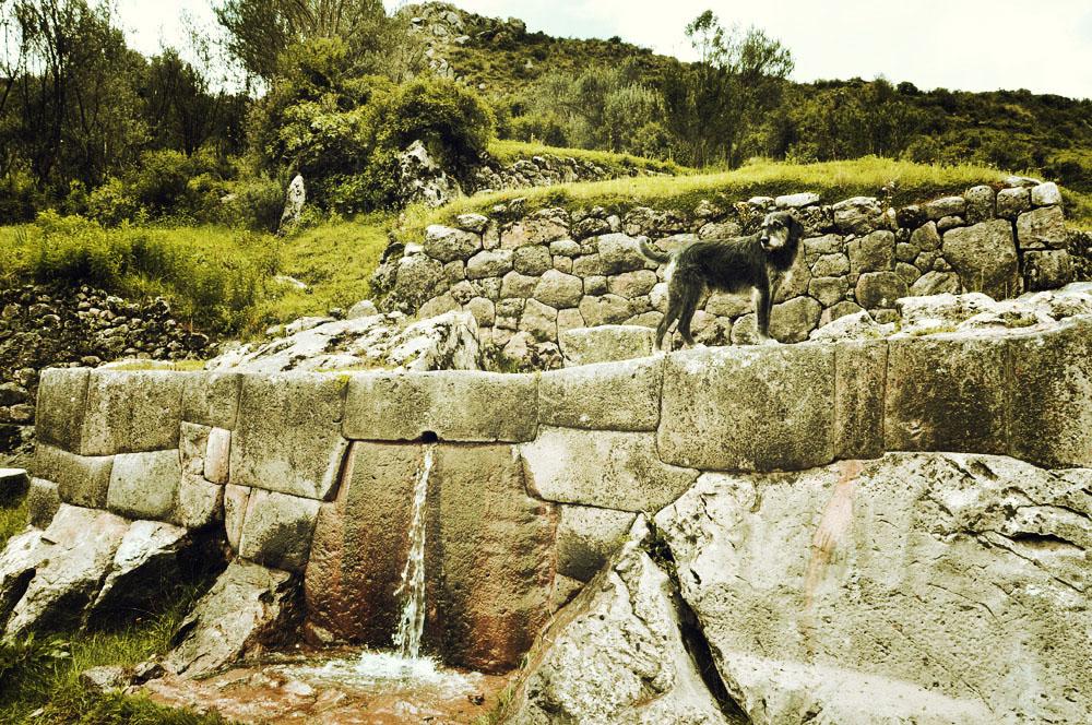 Un chien sur une fontaine à Tambomachay