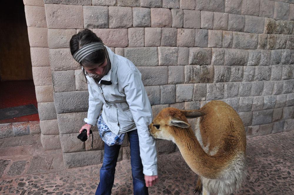 Elvi se fait mordre pas une féroce vigogne