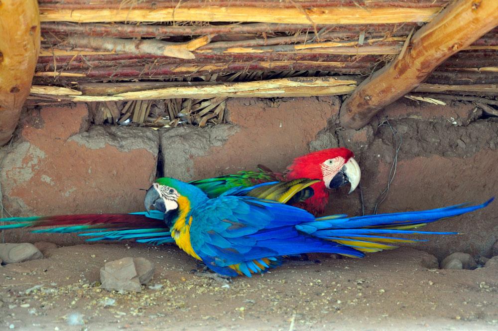 Refuge, perroquets