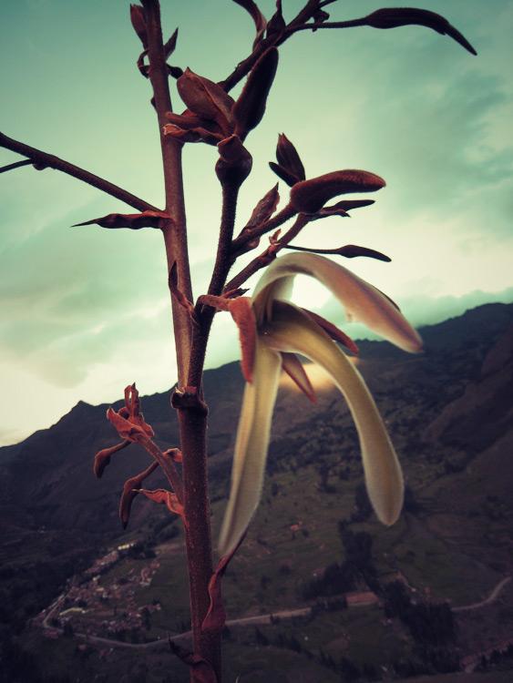 Un genre de fleur