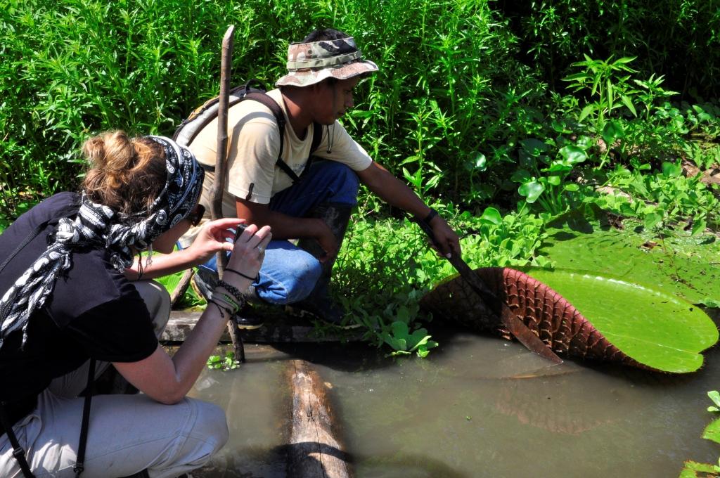 Inspection du nénuphar géant
