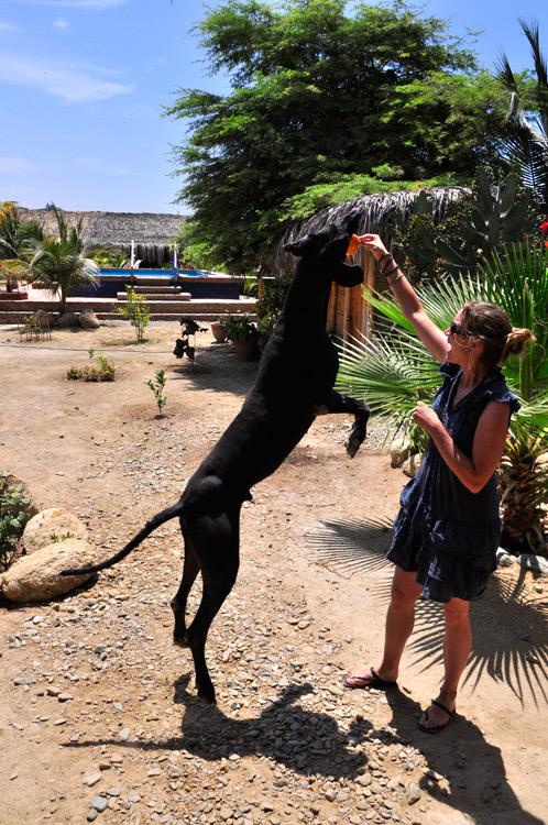Mancora, Trsitan, un des 15 chiens de l'hospedaje Guacamayo