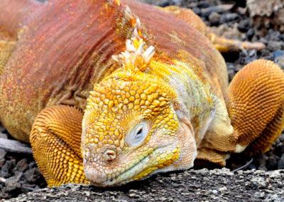 Galapagos, Santa Cruz, sans tabou