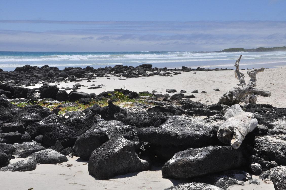 Santa Cruz, Tortuga Bay, c'est beau