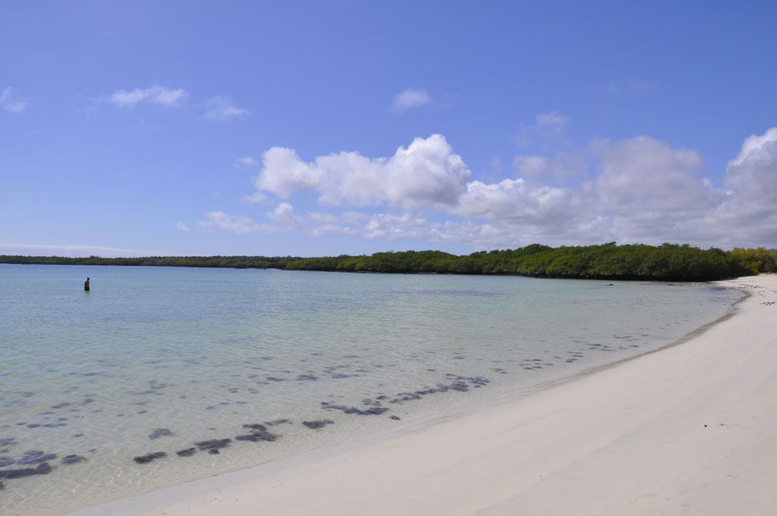Santa Cruz, seul à Tortuga Bay