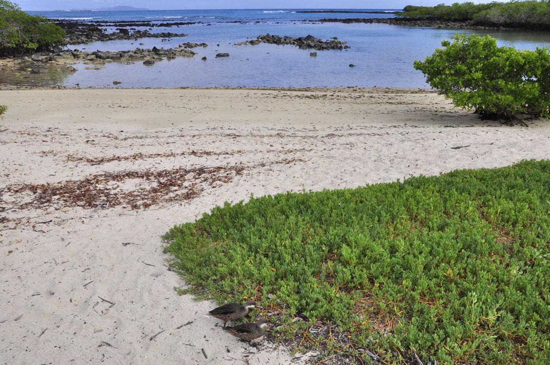 Santa Cruz, playa escondida (coin-coin)