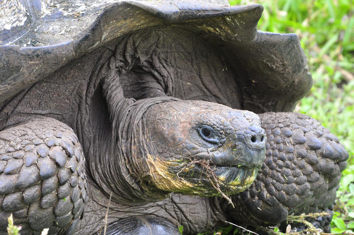 Santa Cruz, réserve de tortues terrestres el Chato