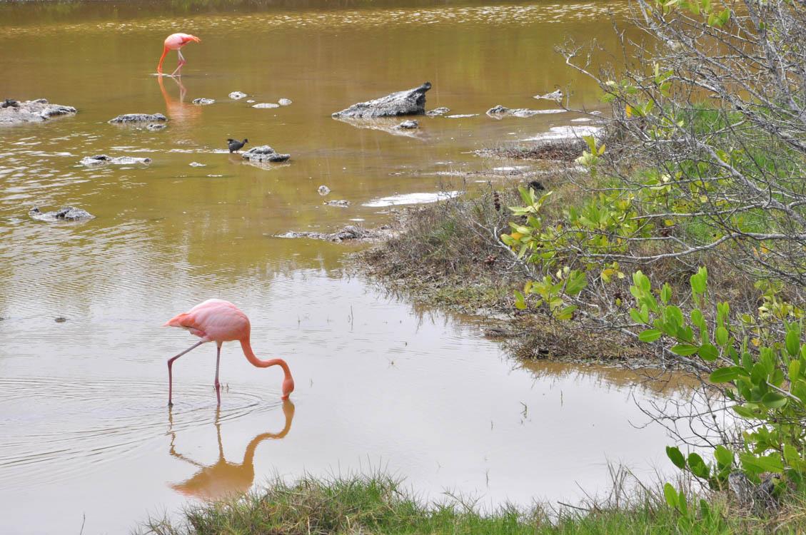 La lagune de Villamil, des flamands très roses