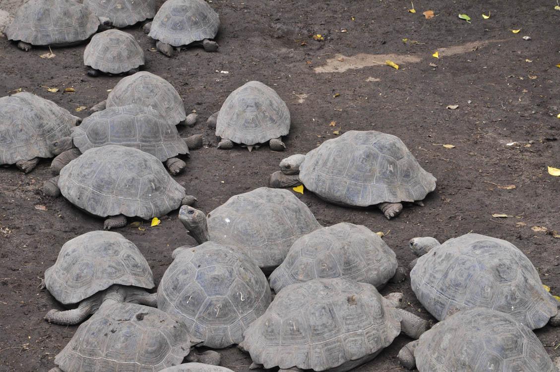 Centre d'élevage de tortues