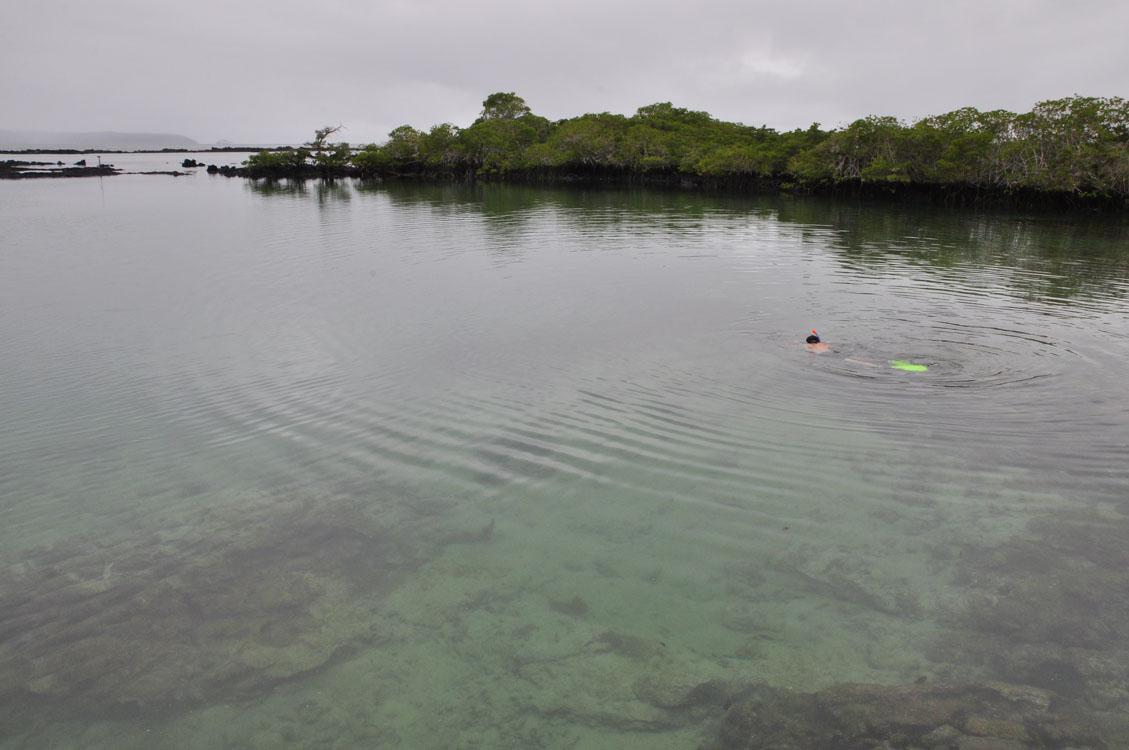 Snorkeling à Concha y Perla