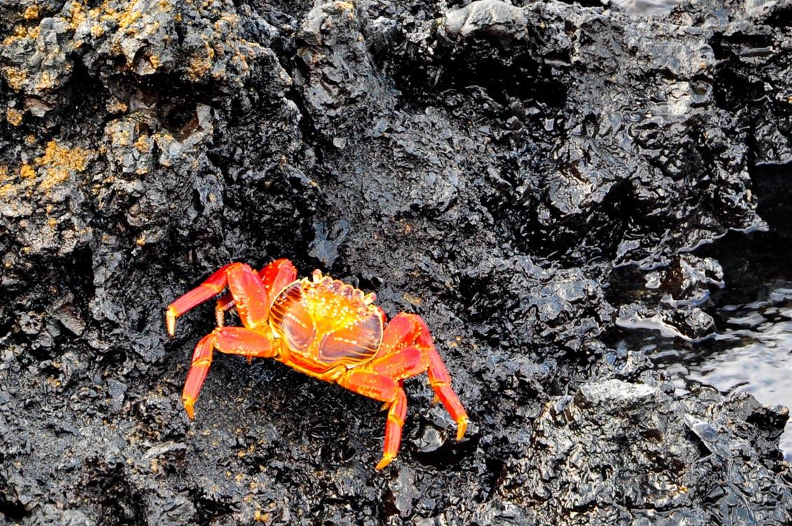 Encore un crabe