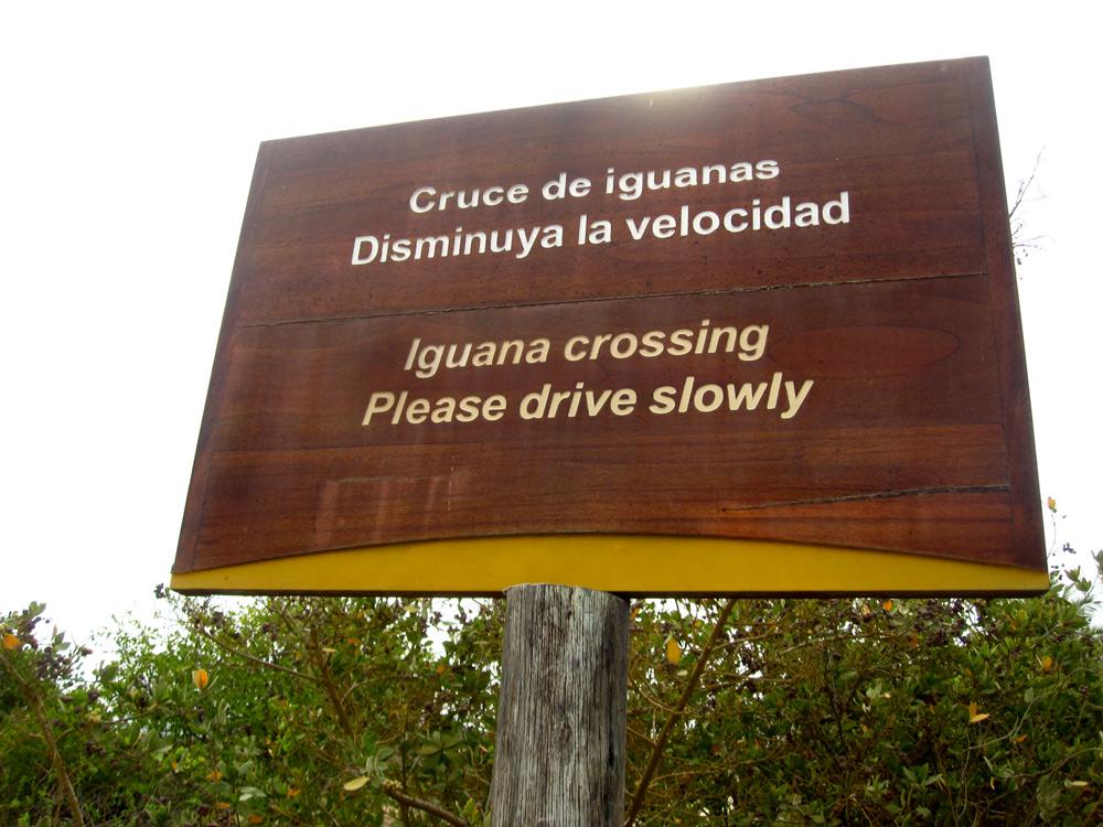 Des fois qu'il y en aurait des assez bêtes pour rouler sur des iguanes avec leur vélo!