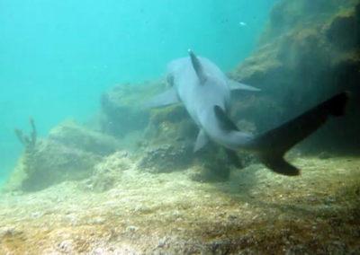 Galapagos, danse avec les requins !