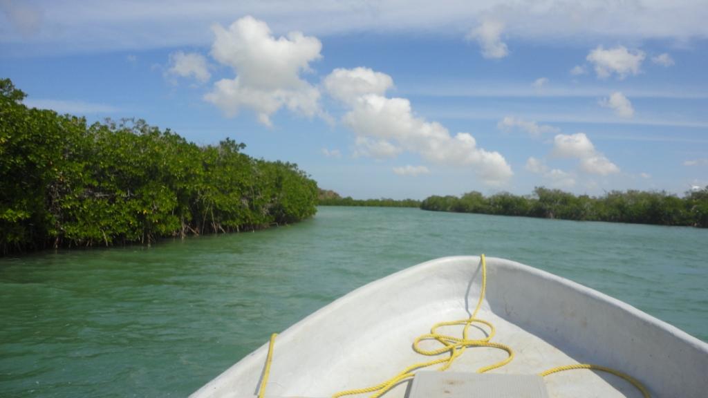Punta Gallinas, la mangrove