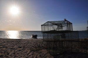 Casiers de pêche à la langouste