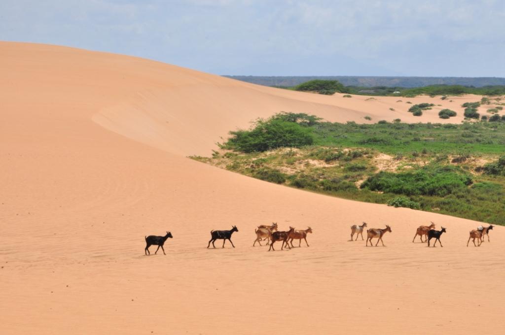 Punta Gallinas, les dunes