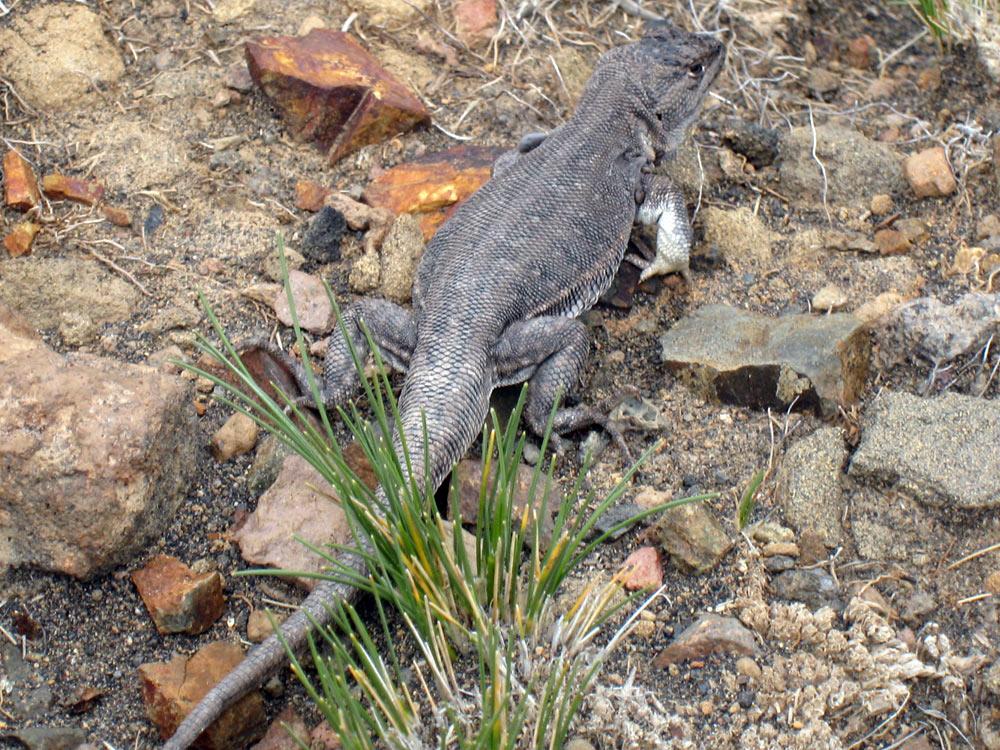 On trouve aussi des reptiles...