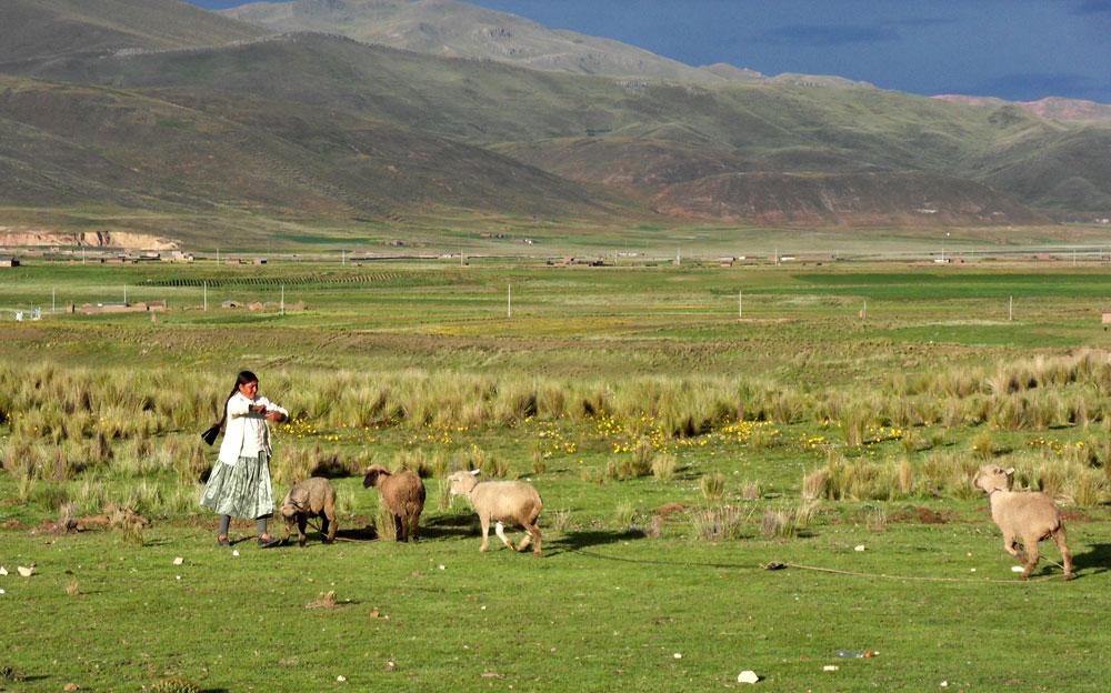 Bergère de l'altiplano