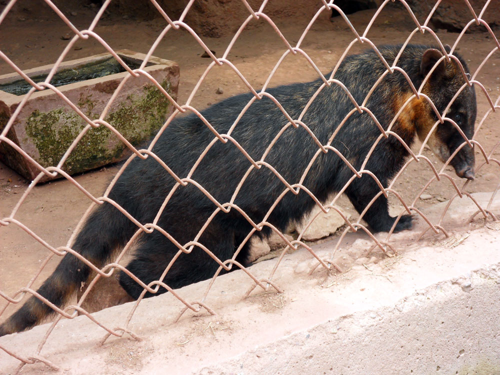 Refuge, une sorte de lémurien-tapir