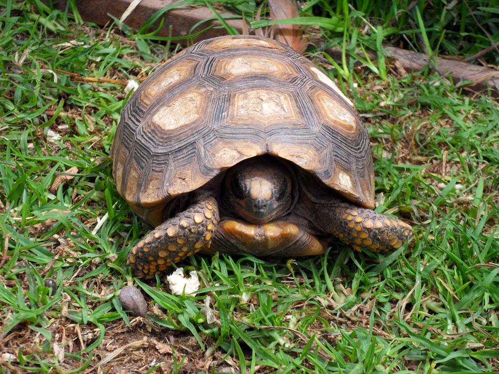 Refuge, on vous présente la tortue