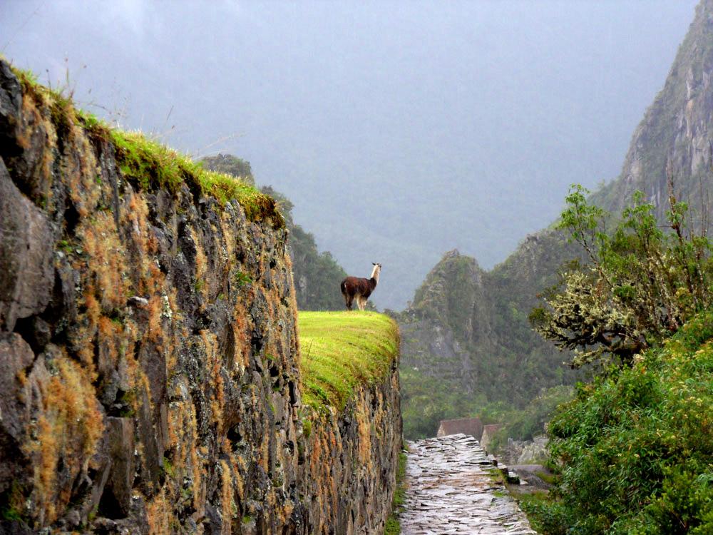 Machu Picchu, autre habitant des lieux